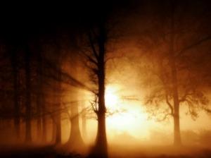 Stillness 2