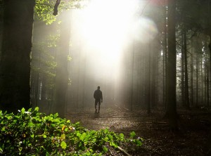 Walk in Gratitude