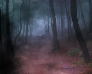 Shadowed Path